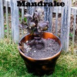 Harry Potter Mandrake DIY